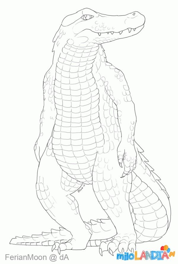 Krokodyle i aligatory :: 14