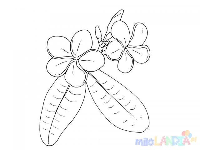 Kwiat polny