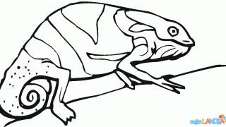 Jaszczurki :: 8