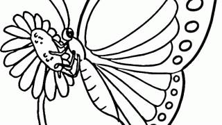 Motyle i gąsienice :: 5