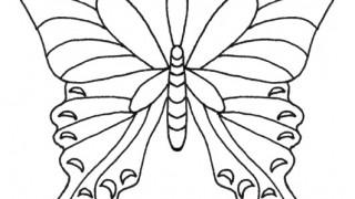 Motyle i gąsienice :: 17