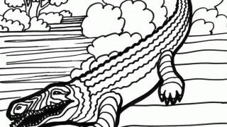 Krokodyle i aligatory :: 13