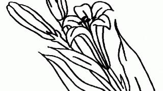 Gałązka lilii