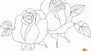 Róża w pąkach
